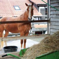 Berufliche Massnahmen Pferdewirtschaft