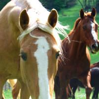 Die Queensranchacademy Pferde
