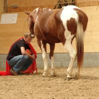 Firmenseminare Mit Pferden
