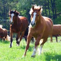 Queens Ranch Academy Herde