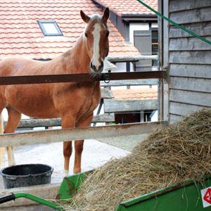 IV-Stellen Begleitung Pferdewirtschaft