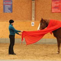Job-coaching Mit Pferden