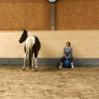 Leadership Training Mit Pferden
