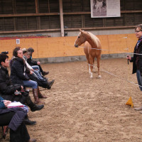 Pferde Als Spiegel Der Persönlichkeit