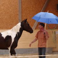 Pferdegestütztes Führungskräftetraining