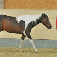 Proleading Business Weiterbildung Mit Pferden