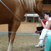 ProLeading Ausbildung Pferdekontakt