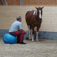 Proleading Business Mit Pferden