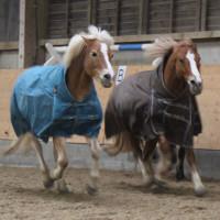Queensranchacademy Pferde