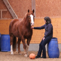Weiterbildung Mit Pferden