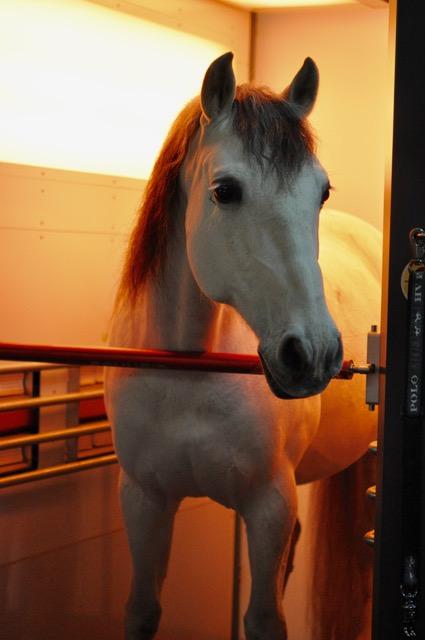 pferd unter gelbem licht